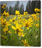 Flowers That Are Wild Canvas Print