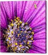 Flowers Within A Flower Canvas Print
