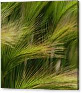 Flowing Grasses Canvas Print