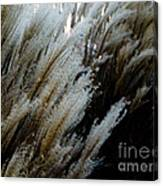 Flowing In The Wind Canvas Print