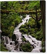 Flowing Stream In Spring Canvas Print