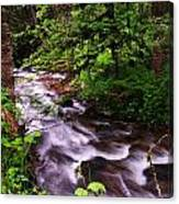 Flowing Through The Forest Canvas Print