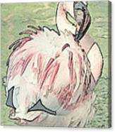 Fluffing Flamingo  Canvas Print