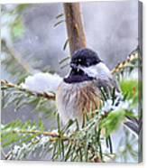 Fluffy Chickadee Canvas Print