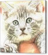 Fluffy Kitten Canvas Print