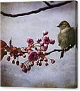 Fluffy Sparrow  Canvas Print