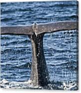 Flukes Of A Sperm Whale 2 Canvas Print