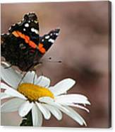 Flutter II Canvas Print