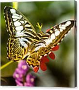 Fluttering Canvas Print