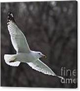 Fly Be Free Canvas Print