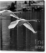 Fly Bye Canvas Print
