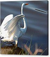 Fly Fly Away Canvas Print