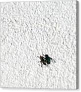 Fly On A Wall Canvas Print