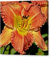 Fly On The Daylily Canvas Print