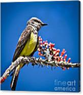 Flycatcher Canvas Print