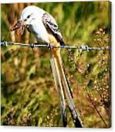 Flycatcher With A Meal Canvas Print