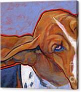 Flying Basset Hound Canvas Print