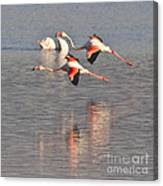 Flying Flamingos Canvas Print