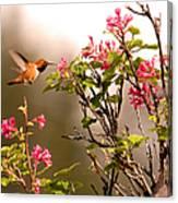 Flying Hummingbird Sipping Nectar Canvas Print
