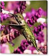 Flying In Lunch Canvas Print