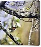 Flying Jewel Canvas Print