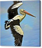 Flying Pelican 4 Canvas Print