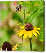Flying Pollen Canvas Print