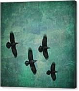 Flying Ravens Canvas Print