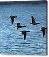 Flyway Canvas Print