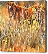 Foal In The Sticks Canvas Print