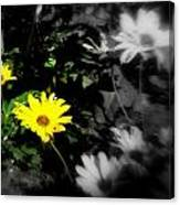Focus On 2 Yellow Daisies Canvas Print