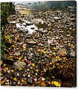 Fog And Fall Color Williams River Canvas Print