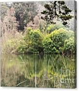 Fog And Reeds Canvas Print