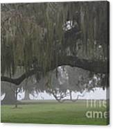 Fog In Ancient Oaks Canvas Print