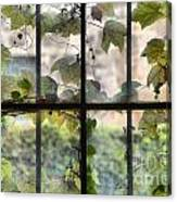 Fog Ivy And Plate Glass Canvas Print