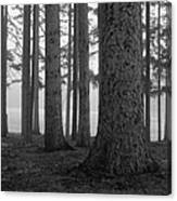 Fog Within The Pines  Bw Canvas Print