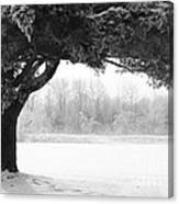 Foggy Icestorm Canvas Print