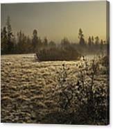 Foggy Meadow Canvas Print