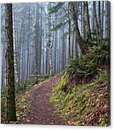 Foggy Morning In The Forest Canvas Print