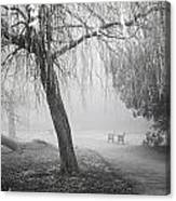 Foggy Willow Canvas Print