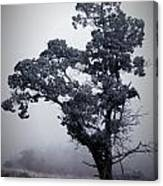 Foggy Winter I Canvas Print
