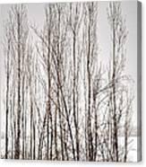 Foggy Winter Tree Fence 13271 Canvas Print