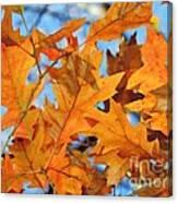 Foglie Di Arancio Canvas Print