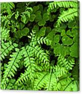 Foliage At Springtime Canvas Print