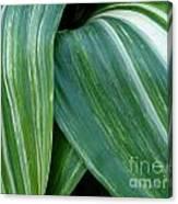 Foliage Folds Canvas Print