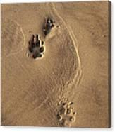 Following My Dog  Canvas Print