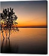 Folsom Lake Tree Canvas Print