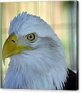 Fontana Eagle Portrait 4 Canvas Print