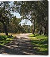 Footpath In Park With Shadows Canvas Print