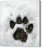Footprint Series. Cat Canvas Print